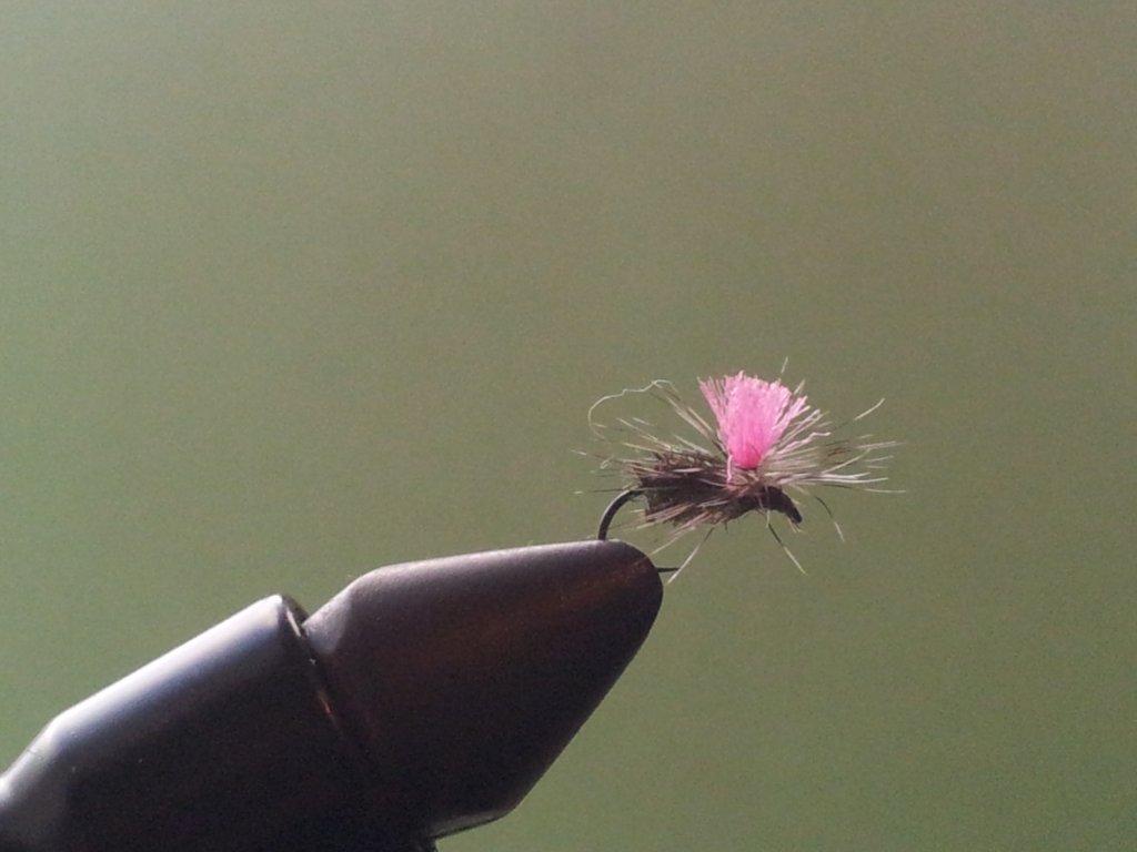 parachute black knat